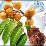 Натуральные мыльные орехи для стирки (обзор)