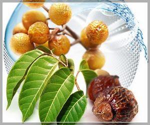 Мыльные орехи для стирки - натуральные средства
