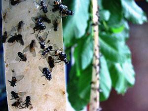 Как вывести пятно от липучки для мух