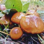 Как отстирать пятна от грибов