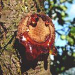 Чем отстирать смолу от дерева с одежды